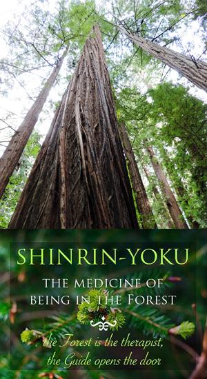 Shinrin-Yoku Forest Medicine