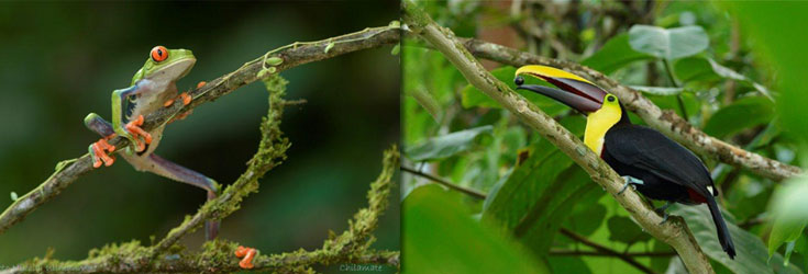 Nature-with-Haida_Costa-Rica-Retreat
