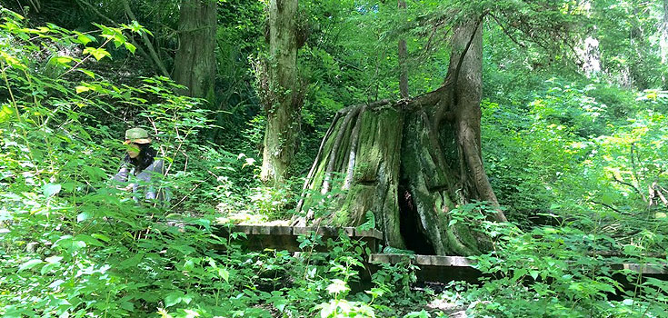 Nature-with-Haida_Forest-Therapy